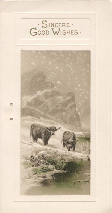 SINCERE GOOD WISHES in gilt above snowy inset of hills & lochs, behind 2 highland cows by water