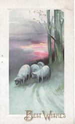 BEST WISHES below red sky behind evening rural scene, 4 sheep on road