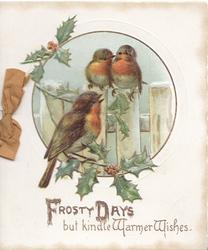 FROSTY DAYS BUT KINDLE WARMER WISHES, 3 English robins, perched on fence & holly