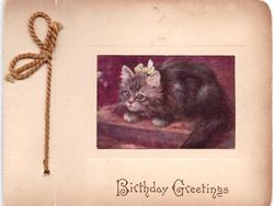 BIRTHDAY GREETINGS opt. in brown below inset of fluffy kitten facing left, wearing yellow bow