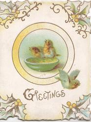 GREETINGS in gilt below circular inset of 2 robins perched on bowl,& another flies, holly & mistletoe in 4 corners