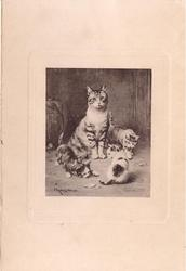 no front title, mother tabby cat with 3 kittens