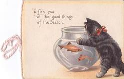 TO FISH YOU ALL THE GOOD THINGS OF THE SEASON kitten paws at fish bowl