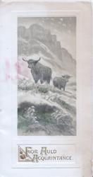 FOR AULD ACQUAINTANCE in gilt below inset of hills & lochs, behind 2 highland cows in snowy heather