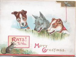 MERRY GREETINGS(M & G illuminated) in gilt below 3 dogs looking over fence at rat reading plaque RATS TO YOU