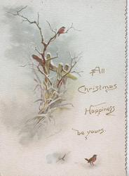 ALL CHRISTMAS HAPPINESS BE YOURS. robins in snowy rural scene, snow & birds also on back