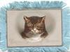 WISHING YOU A HAPPY BIRTHDAY  head of cat  gilt margins
