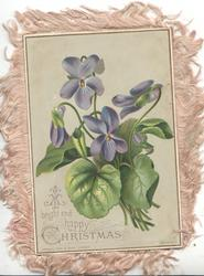 A BRIGHT AND HAPPY CHRISTMAS below left, violets on a green background