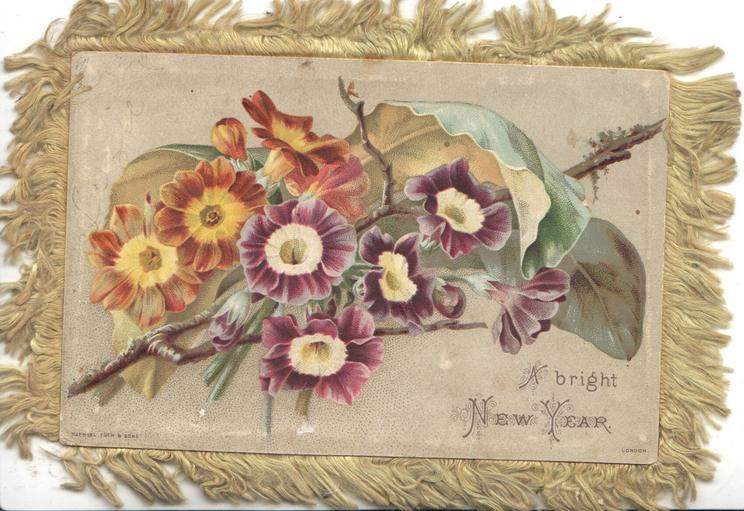 A BRIGHT NEW YEAR, purple & yellow primroses