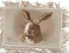 HAPPY RETURNS  head of hare looking partly left
