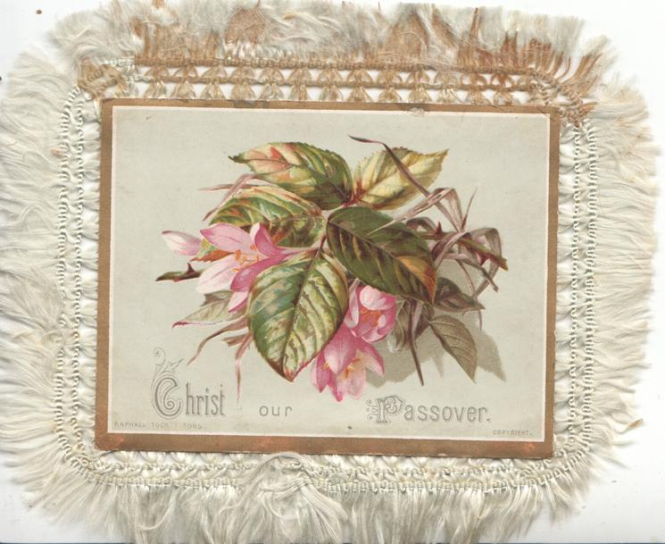 CHRIST OUR PASSOVER-pink croci under prominent leaf, image used on another greeting in this set