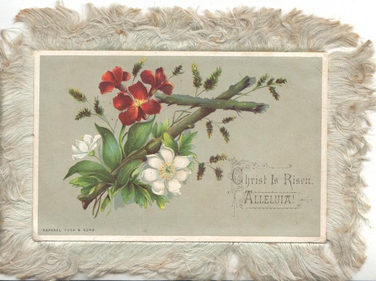 CHRIST IS RISEN  ALLELUIA:-2 white & 3 red wallflowers, scant lavender, around wooden cross