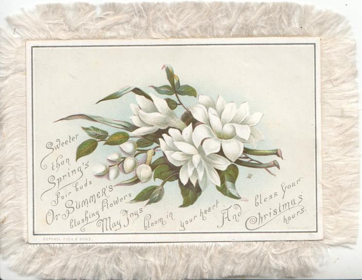 A HAPPY CHRISTMAS KIND HEARTS CAN  MAKE DECEMBER BLITHE AS MAY below spray of white clematis