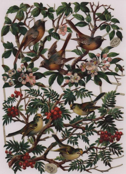 birds with blossom or red berries