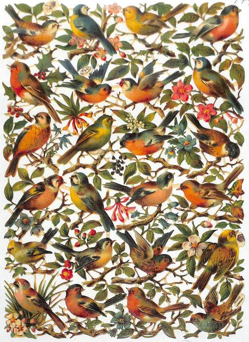 birds on branches with blossoms or fruit