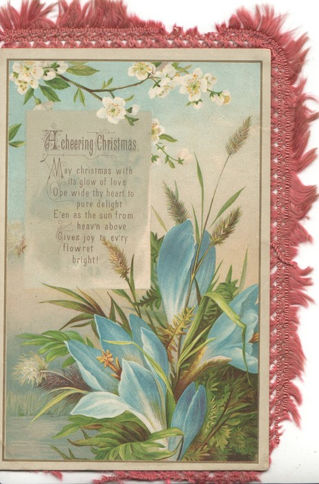 A CHEERING CHRISTMAS   MAY CHRISTMAS....verse white apple blossom above. blue crocus & grasses below