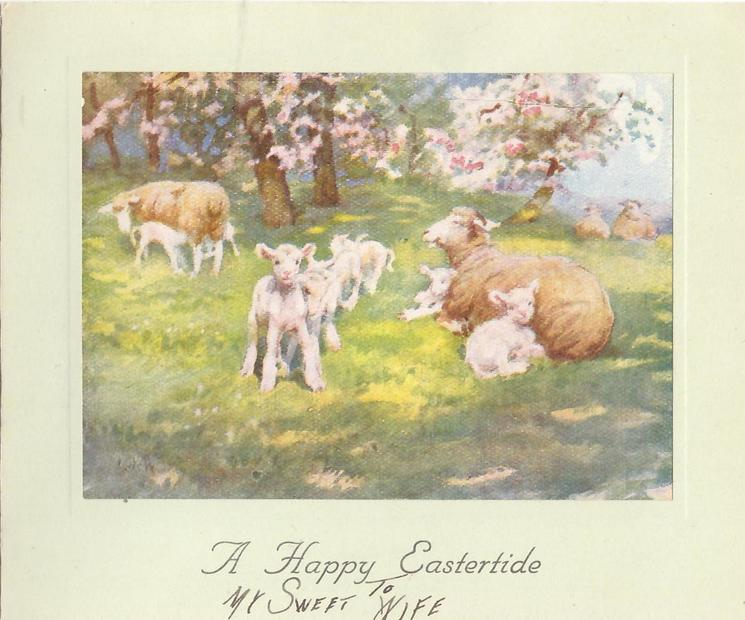 A HAPPY EASTERTIDE sheep & lambs in meadow with blossoming trees