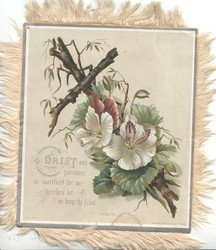 CHRIST OUR PASSOVER IS SACRIFICED FOR US THEREFORE LET US KEEP THE FEAST 1. COR.5.7.gernanium  flowers in front of wooden cross