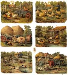 farmyard scenes