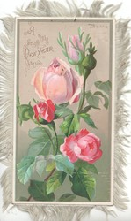 A RIGHT BRIGHT NEW YEAR TO YOU pink roses with buds