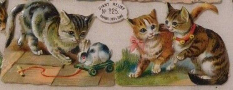 cats and kittens at play