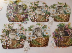 cats and flowers in wicker baskets