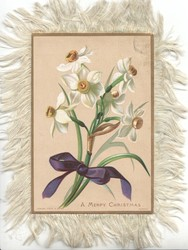 A MERRY CHRISTMAS narcissi tied with printed purple ribbon