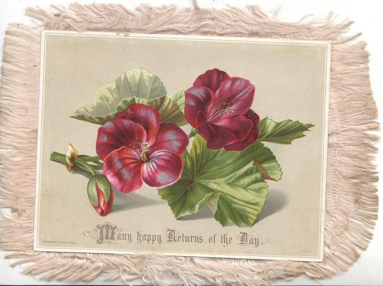 MANY HAPPY RETURNS OF THE DAY 2 purple geraniums & bud