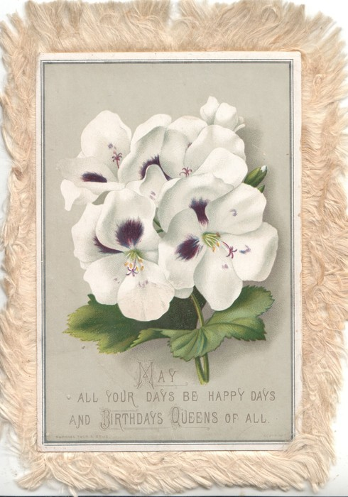 MAY ALL YOUR DAYS BE HAPPY DAYS AND BIRTHDAYS QUEENS OF ALL white pansies