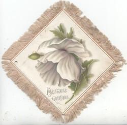 CHRISTMAS GREETINGS white anemone & bud