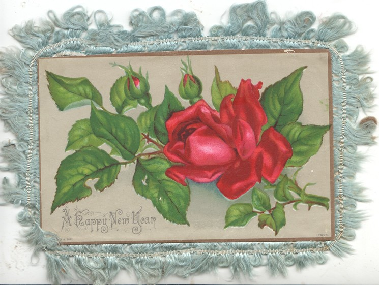 A HAPPY NEW YEAR red rose & 2 buds