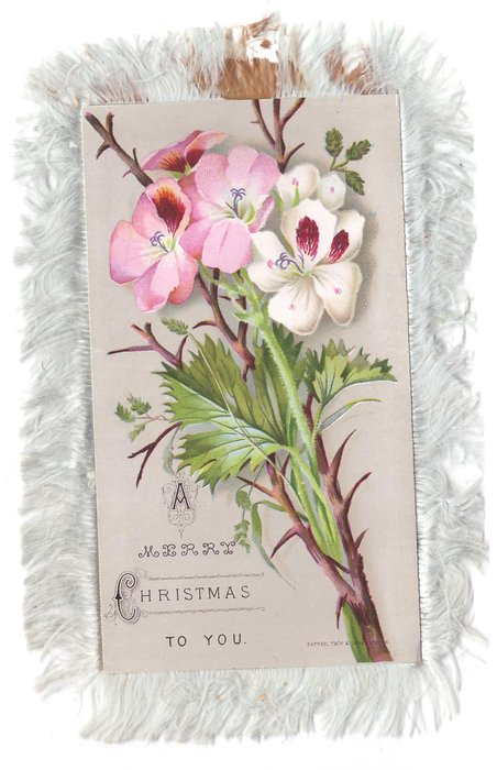 A MERRY CHRISTMAS TO YOU below pink & white blossoms on thorny branch