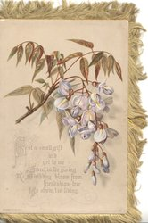 BUT A SMALL GIFT AND YET TO ME SWEET IN THE GIVING BIRTHDAY BLOOM FROM FRIENDSHIPS FREE TO SHOW 'TIS LIVING wisteria