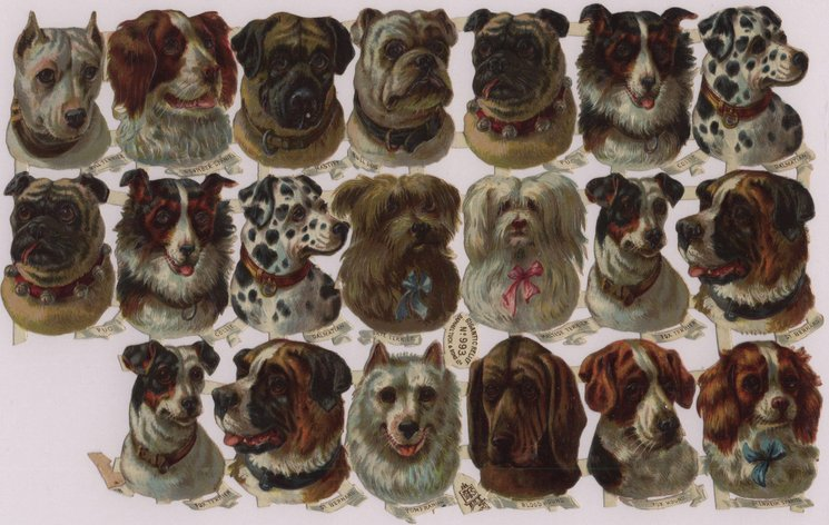 dog heads, various breeds labelled