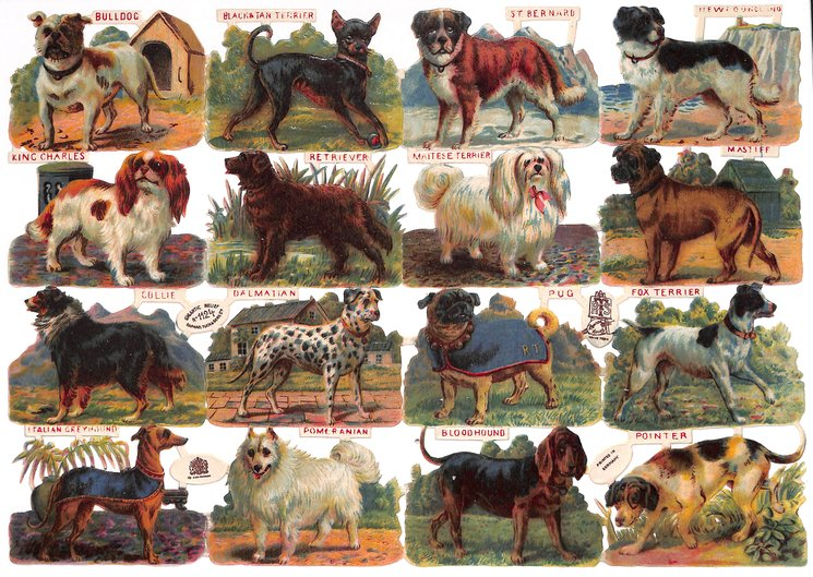 dogs, various breeds labelled