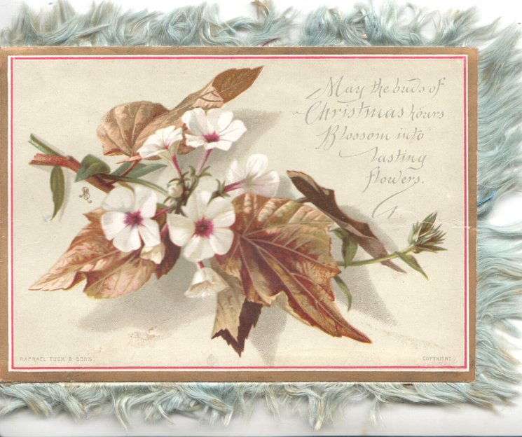 MAY THE BUDS OF CHRISTMAS HOURS BLOSSOM INTO LASTING FLOWERS white phlox & bronzed leaves
