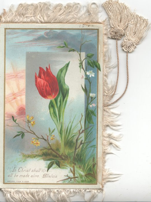 IN CHRIST SHALL ALL BE MADE ALIVE. ALLELULIA  red tulip rural setting