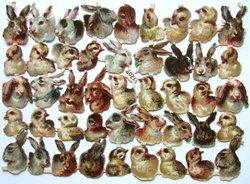 chicks and rabbits
