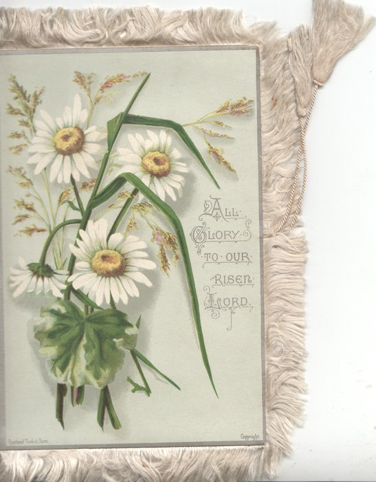 ALL GLORY TO OUR RISEN LORD yellow centred white daisies left