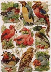 FOREIGN BIRDS