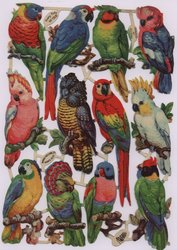 PRETTY POLLY parrots