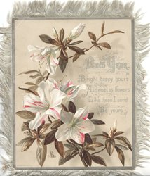 NEW YEAR BRIGHT front panel HAPPY HOURS AS SWEET AS FLOWERS LIKE THESE I SEND BE YOURS white azaleas with red stripes.