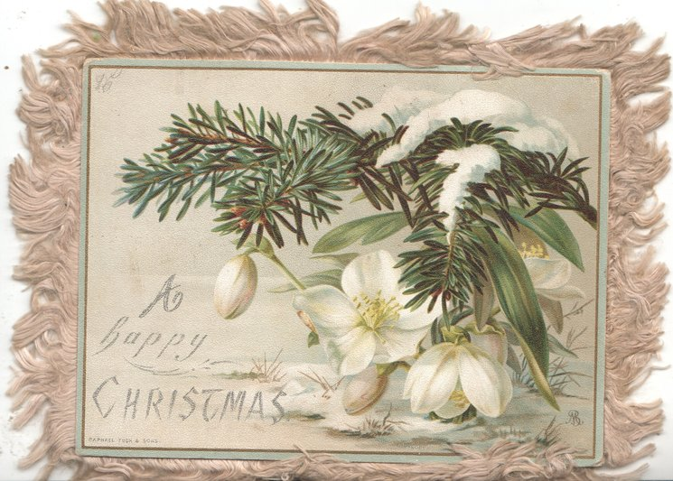 A HAPPY CHRISTMAS & snowdrops & evergreen
