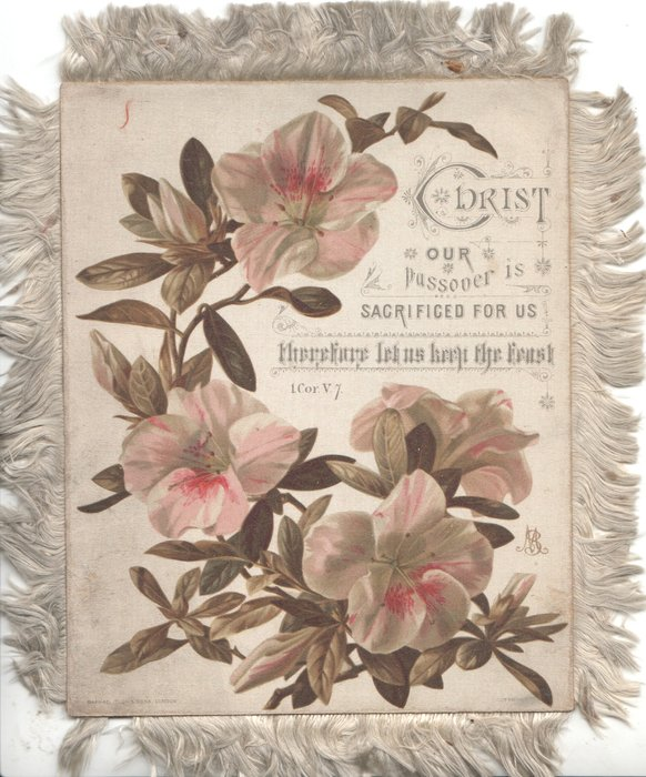 CHRIST OUR  PASSOVER IS SACRIFICED FOR US THEREFORE LET US KEEP THE TRUST 1 COR /V7, light pink azaleas