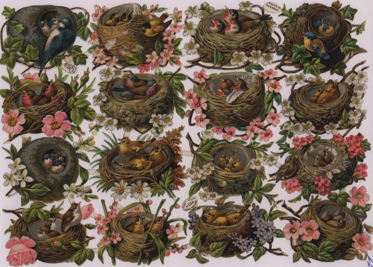 birds with nests and blossoms