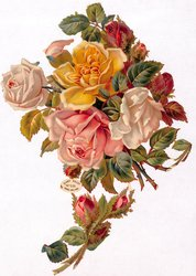roses in bouquets