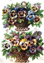 baskets of pansies