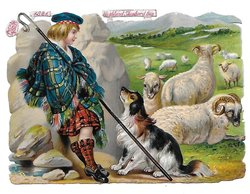 HIGHLAND SHEPHERD BOY