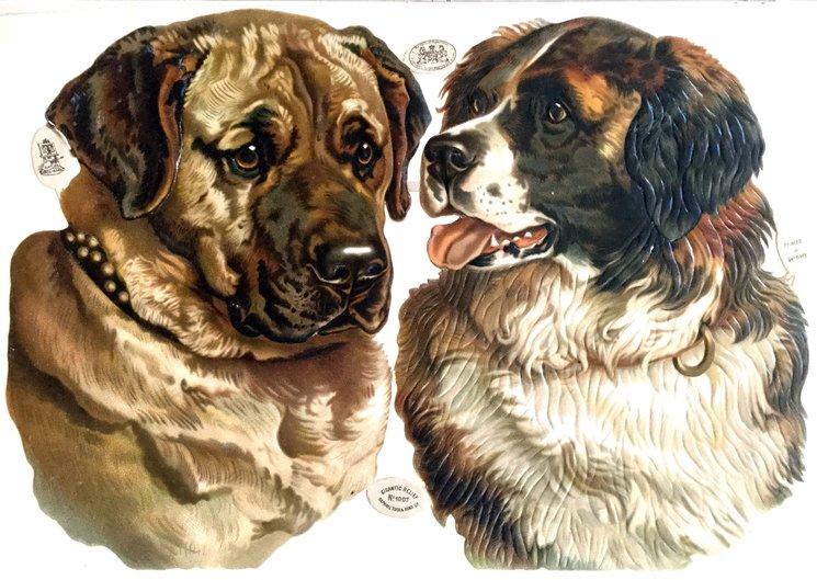dog heads ,Bull Mastiff and St. Bernard