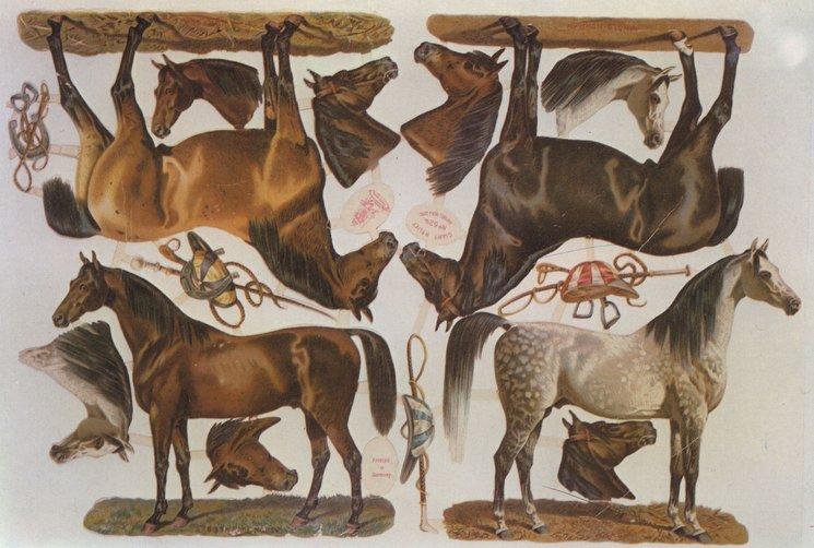 horses and tack